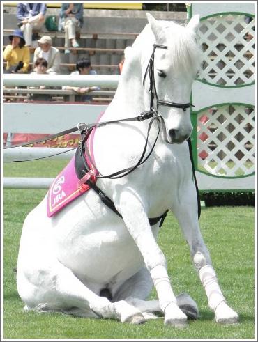 競馬ぼやきイメージ019