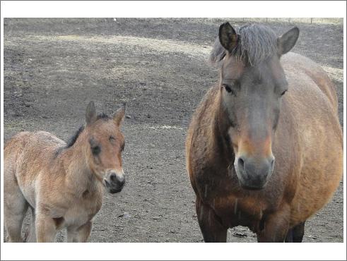 有馬記念(特別登録馬)-004
