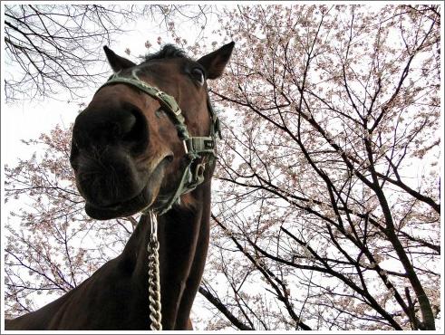 有馬記念 予想-